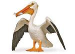 Safari White Pelican
