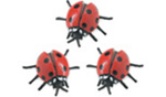 Safari Mini Ladybugs-3 Pack