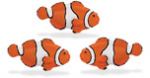 Safari Mini Clown Fish 3 Pack